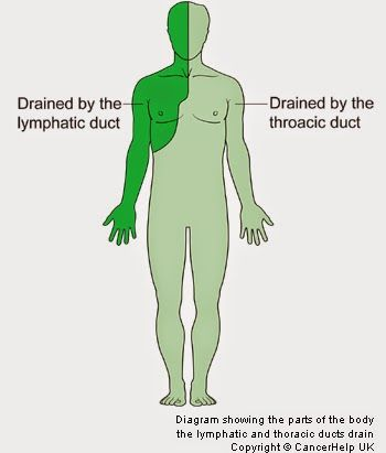 All about the lymphatic system!                                                                                                                                                      More