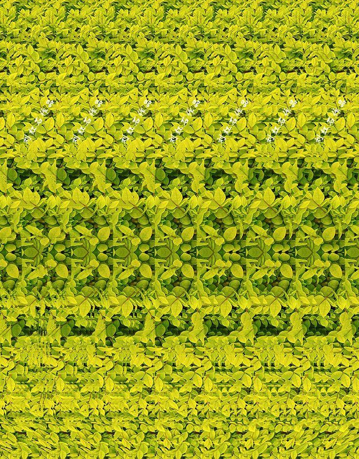3D PHOTOGRAPHgiraffe CAN YOU SEE IT? MagicEye