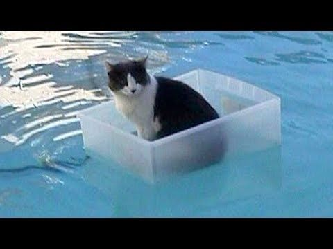 CATS Will Make You LAUGH YOUR HEAD OFF - Funny CAT Compilation : Video Clips From The Coolest One