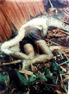 Anaconda Eating People - Bing Images