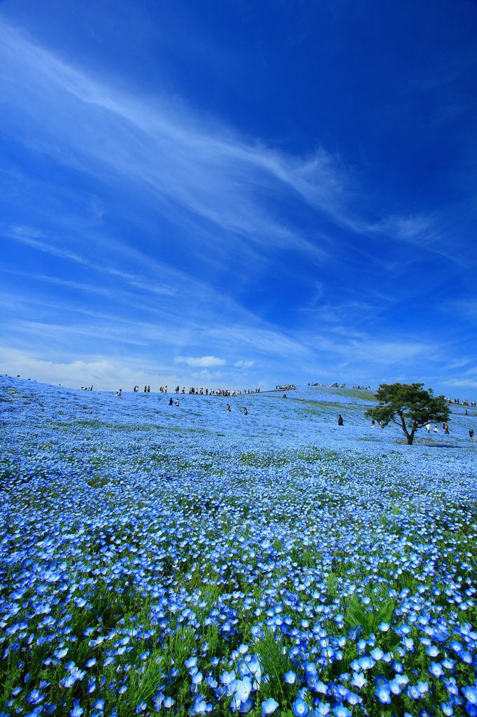 Amazing !! Everything Blue, Nemophila Repin & Like. Thank you . Listen to Noel songs. Noelito Flow.