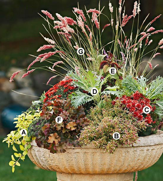 Most plants with silver or gray foliage are native to the Mediterranean, therefo… – Container Gardening