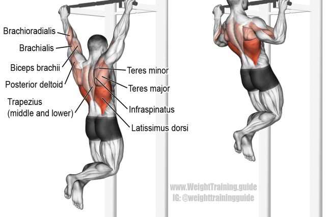 Pull-up exercise illustration