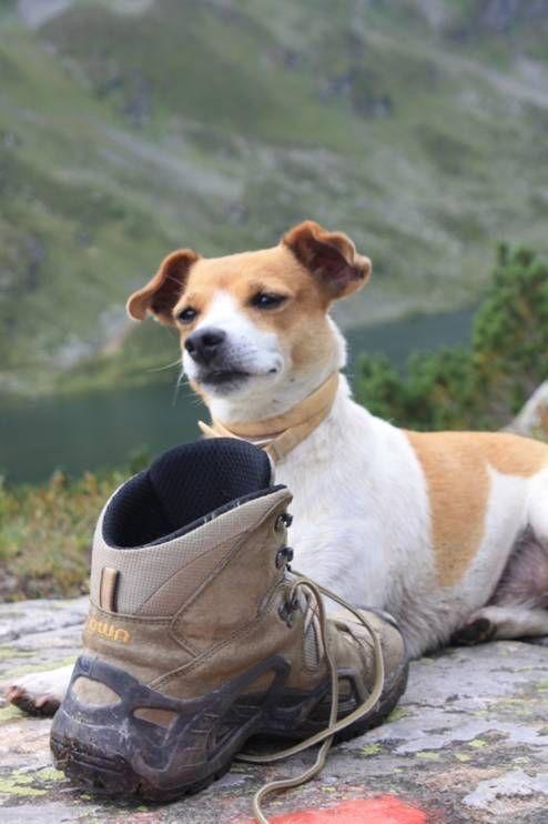Reisen & Wandern mit Hund