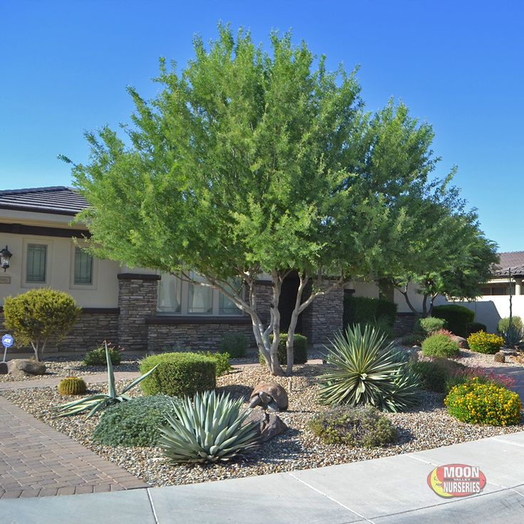 Top 70 Best Desert Landscaping Ideas: Best 25+ Water Wise Landscaping Ideas On Pinterest
