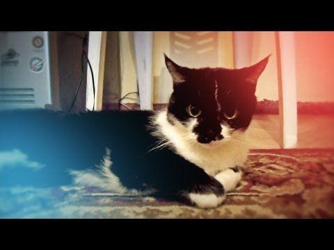 Хозяйка таки нашла лужу под столом / Ржу не могу / Cat scared - YouTube