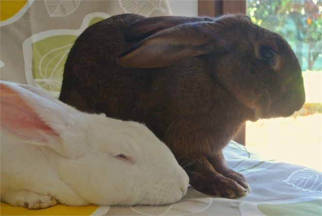 my bunnies  Conigli in forma con uno snack nutriente - VanityFair.it