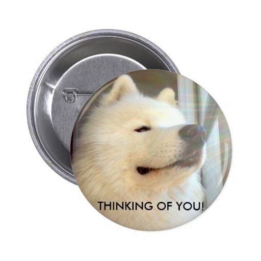 Samoyed in thought order this badge at Zazzle