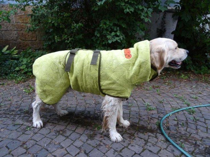 retriever mit siccaro hundemantel wetdog trockenmantel alles f r den hund pinterest. Black Bedroom Furniture Sets. Home Design Ideas