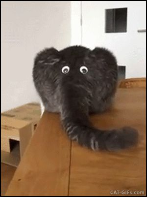 CAT GIF • Funny elephant butt rear end of a cat with googly eyes