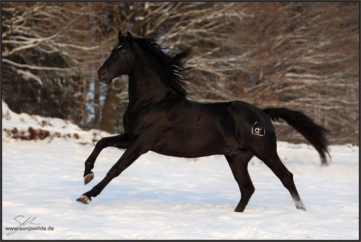 37 best pferde im schnee winter images on pinterest. Black Bedroom Furniture Sets. Home Design Ideas