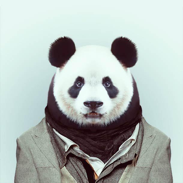 Zoo Portraits – Les animaux habillés de Yago Partal   Ufunk.net
