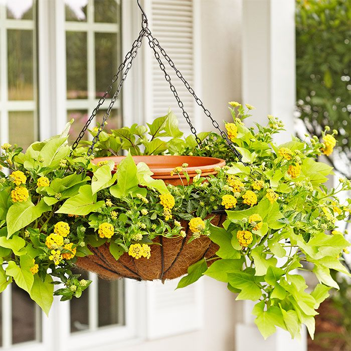 For A Twist On A Hanging Basket Plant The Perimeter Of