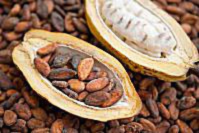 What Is Raw Cacao (aka Raw Chocolate)?