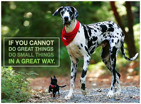 #inspire #quote #cute #dogs