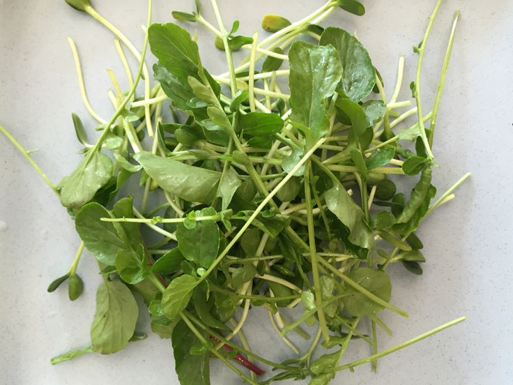 2. Add freshly cut salad greens from your garden.