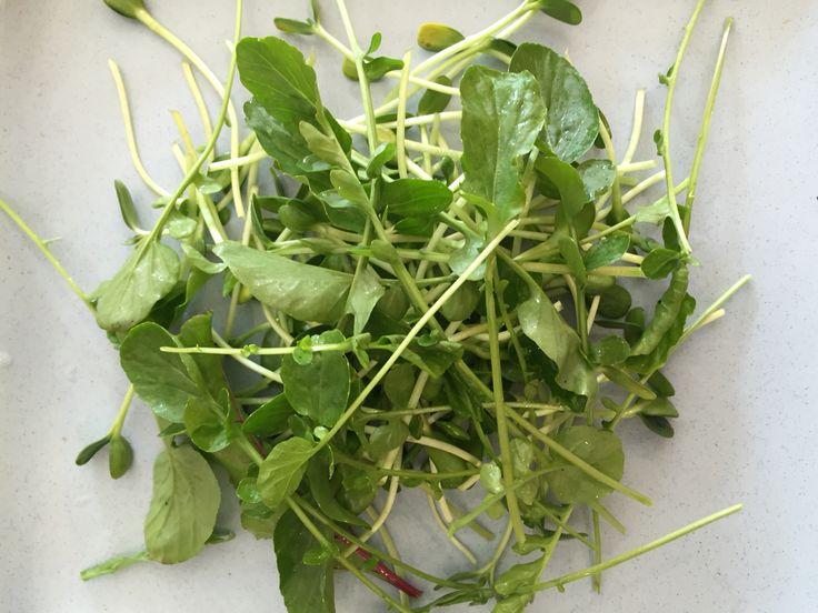 2. Add freshly cut salad greens from your garden.
