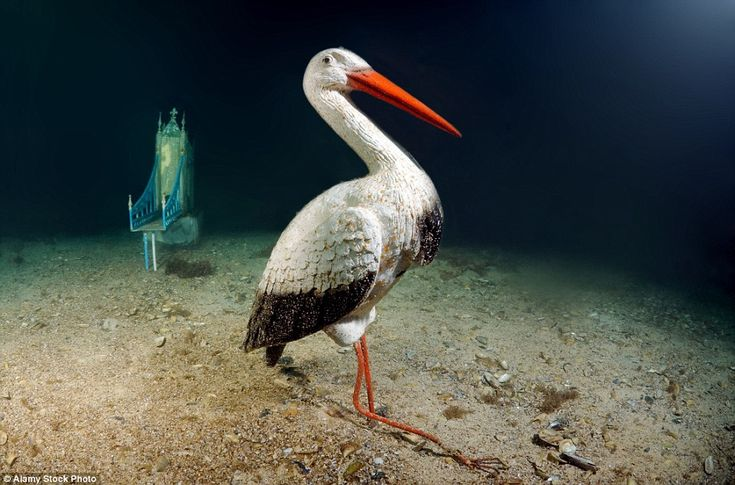 """""""ALLEY OF LEADERS"""" (A model of a Pelican), UNDERWATER MUSEUM, CRIMEA, 1992"""
