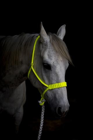 Electric Yellow Braided Halter  Hand Braided by Duke City Tack - includes lead rope! Made of paracord (Halter) and muletape (lead)