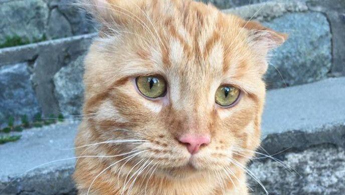 Nejsmutnější kočka na světě - 1