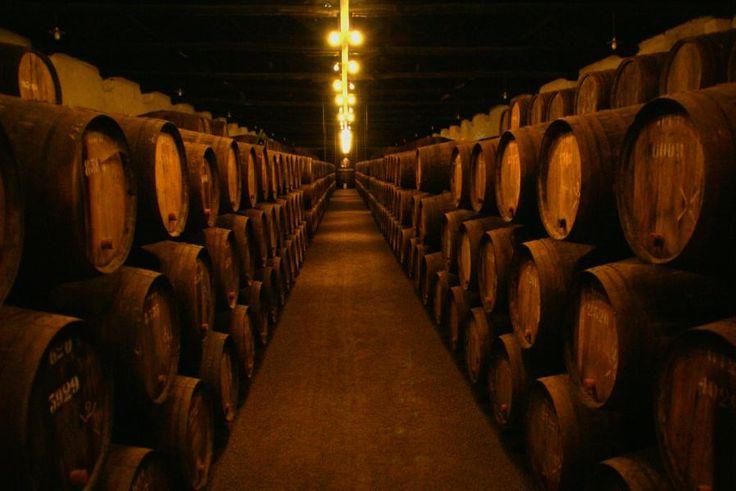 Wine Cellars and Boat Trip   ESN Porto