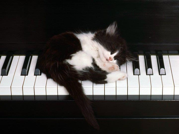 """I can't practice the piano, Mom, the kitten is sleeping on it!"" ""Oh, okay...but as soon as the kitty wakes up, you better be practicing!"""