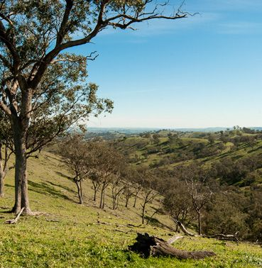 Oak Valley rural land for sale – NSW, Holbrook, Albury, Wagga Wagga, Mount Kosciuszko • Nature Conservation Trust of NSW