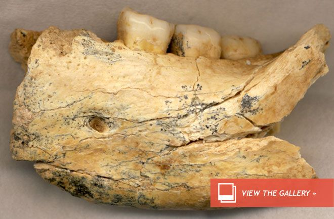 """""""Half-Million-Year-Old Human Jawbone Found: ...in a cave in Serbia...The jawbone, which may have come from an ancient Homo erectus or a primitive-looking Neanderthal precursor, is more than 397,000 years old, and possibly more than 525,000 years old. The fossil, described today (Feb. 6) in the journal PLOS ONE, is the oldest hominin fossil found in this region of Europe, and may change the view that Neanderthals, our closest extinct human relatives, evolved throughout Europe around that…"""