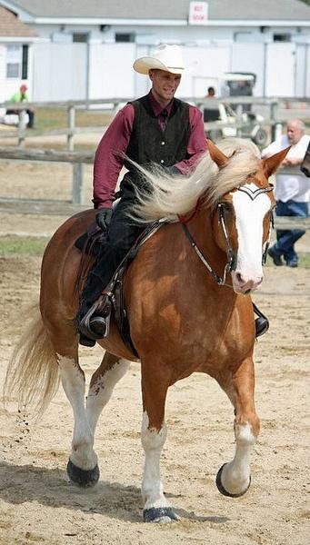 "Cool cowboy riding a BIG ""cow pony""!"