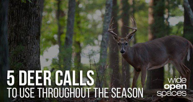 The Only 5 Deer Calls You Need This Season [VIDEO]