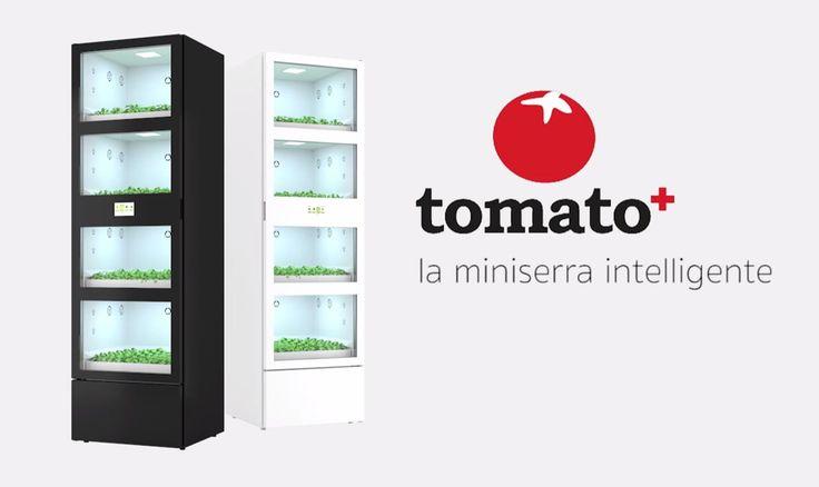 A+Tomato++házi+üvegház,+amelyet+öt+lombardiai+fiatal+talált+ki+vendéglők+és+lakások+számára.+Zöldség-inkubátorukat+2016-ban+szabadalmaztatták.  A+találmány+működése+nagyon+egyszerű+–+írja+a+La+Stampa.+LED+fények+reprodukálják+a+nappalok+és+az+éjszakák+váltakozását+és+teszik+lehetővé+a+kultúrák+28…