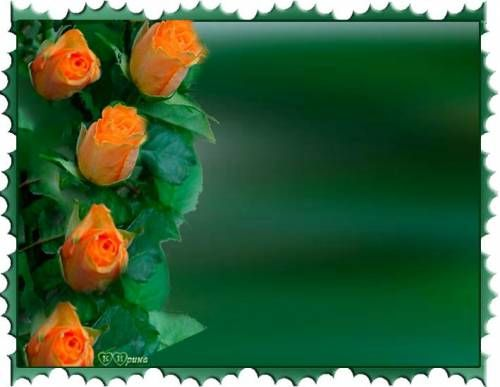 Красивые Розы оранжевого цвета на зеленом рамки