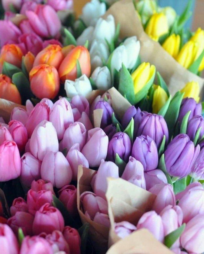 Gambar Bunga Menyatakan Cinta Bungatandacinta Bungauntukmenyatakancinta Selainmawar 6 Fakta Unik Tentang Bunga Mawar Merdeka Flowers Tulips Pretty Flowers