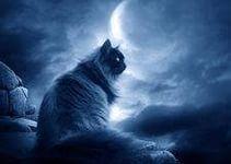 Что общего у котов и Шерлока Холмса? Сколько информации хранится в их «чертогах разума»? Как устроена кошачья память.  Вчера мне почему-то вспомнился один из первых споров в ЖЖ по поводу кошек. Я спорила с дамой о наказаниях для кошек. Дама считала, что кошки понимают человеческую речь, а еще понимают за что она их наказывает, когда придя домой, она обнаруживает лужу или разбитый цветочный горшок. Она яростно пыталась доказать мне, что у кошки память не как у золотой рыбки, и она помнит все…