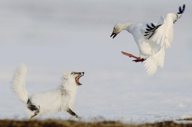 Foto: Sergey Gorshkov] / Veolia Environnement Wildlife Photographer of the Year
