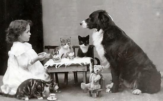 little girl having a tea party with her pets