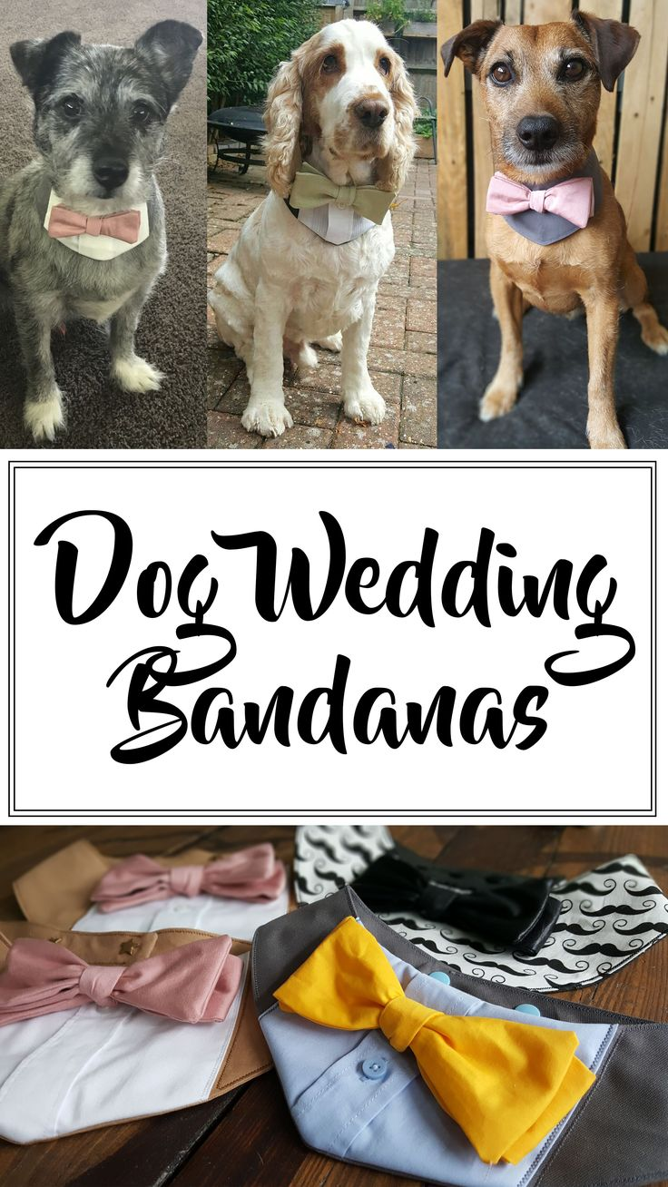 Dog wedding bandana collars - little tuxedo style collars with bow tie. Made in choice of colours to match your wedding colours. Perfect wedding attire for your dog guest!