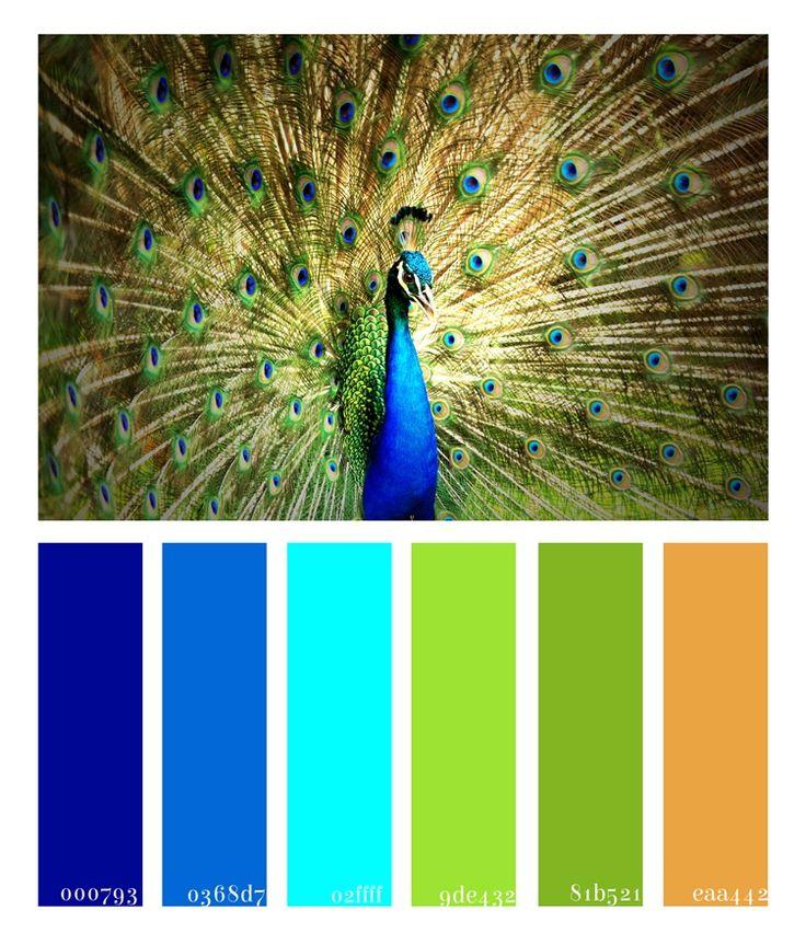 15 Must See Peacock Colors Pins Purple Teal Peacock