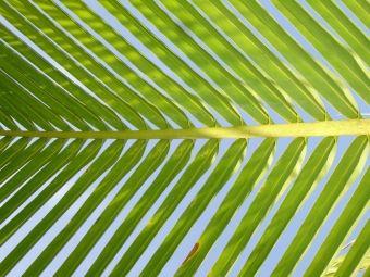 zielone filtry - rośliny oczyszczające powietrze fot. Roberto Justo Kabana - Pixabay.com