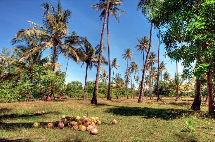 Inland? a coconut dream  ;)