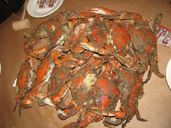 Chesapeak Bay crabs... A lot of work for juicy crab meat