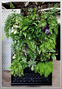 80 best Jardines verticales Vertical Garden images on Pinterest