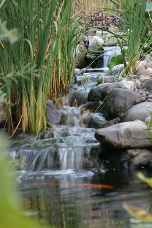 beautiful water feature with creek, pond and koi