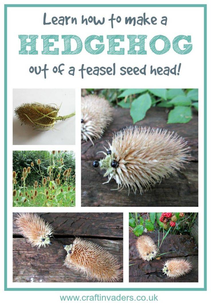 Learn how to make a Hedgehog out of a teasel seed head in our super easy…