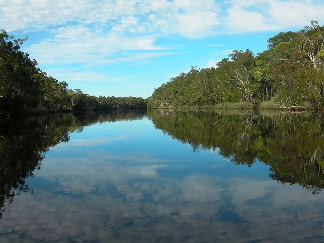 #Noosa everglades, #Australia