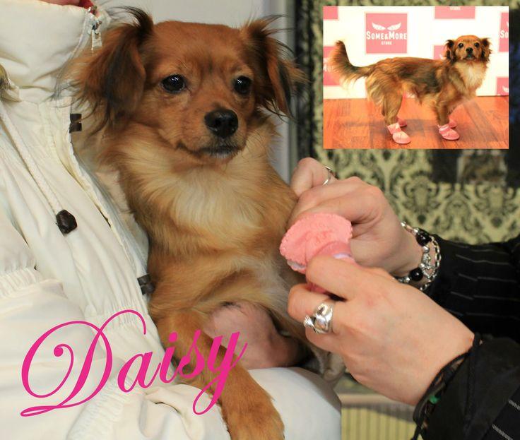 Daisy ja #ugg it www.somemore.fi