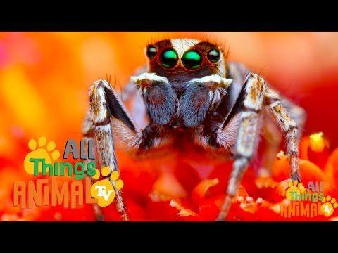 ▶ SPIDERS: Animal videos for children and kids. Preschool   Kindergarten learning. - YouTube