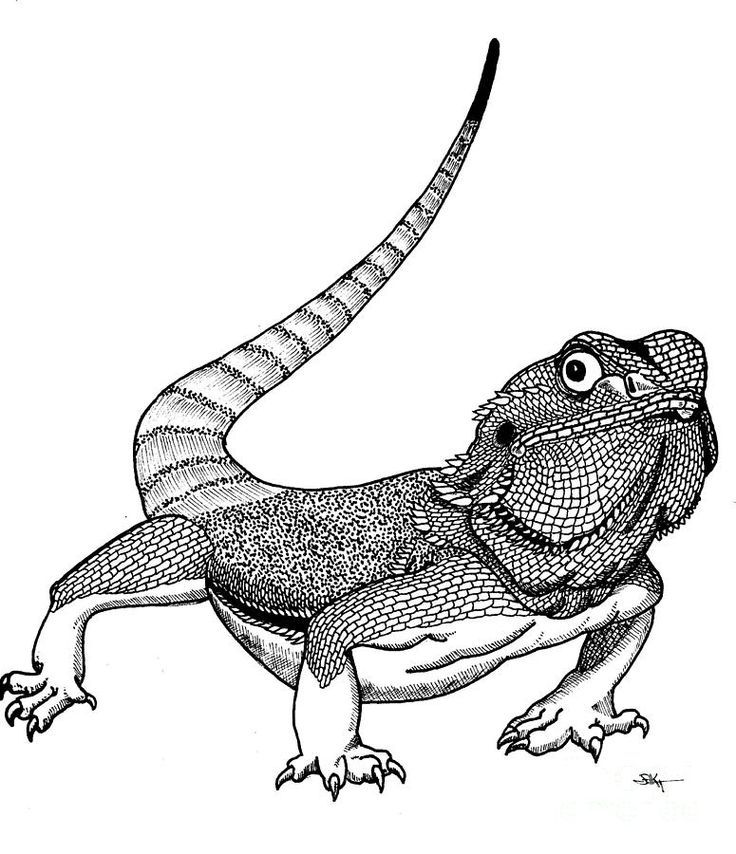 Bearded Dragon Coloring Pages Best Coloring Pages For Kids In 2020 Dragon Coloring Page Bearded Dragon Colors Pet Dragon