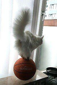 CatStuff: Funny Cat Photos