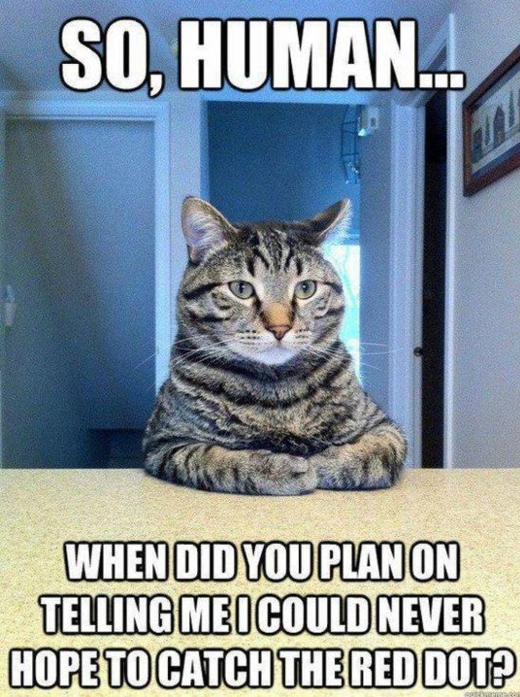 funny cat, cat, laser pointer